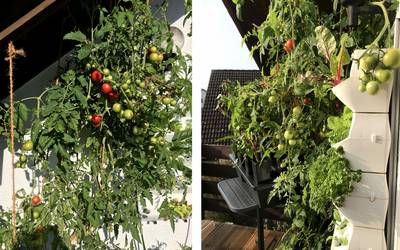 Super Hydroponik: Vertikaler Garten - vertikaler Gemüseanbau auf dem Balkon SY91